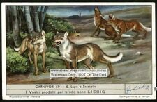 Wolf And Golden Jackal Nice c50 Y/O Trade Ad Card