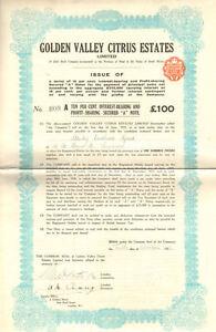 Golden Valley Citrus > South Africa stock certificate