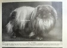 Ch Yu-Fu Of Alderbourne Mrs Ashton Cross Pekingese Dog 1934 Vintage Photo Print