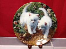 A Chance Meeting White American Shorthairs Knowles Plate Amy Brackenburys Cat