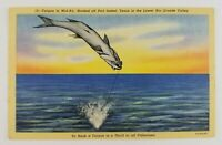 Postcard Linen Fishing Hooked Tarpon Port Isabel Texas Rio Grande Valley