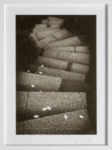 """RYUIJIE 2014 STAIRS WITH LEAVES 4""""X6"""" PLATINUM PHOTOGRAPH - MAKE AN OFFER!!"""
