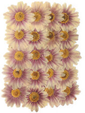 pressed flowers, large daisy 20 pieces for floral art craft scrapbooking