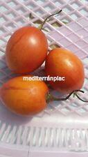 GELB,YELLOW Tamarillo Cyphomandra b.,Baumtomate,Tree Tomato,20 Samen,20 seeds