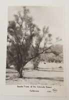 Vintage Real Photo Post Card RPPC Smoke Trees of Colorado Desert FRASHERS Fotos