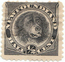 Newfoundland  dog stamps