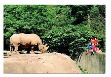 White Rhinoceros Postcard Catskill Game Farm New York Wild Animal People Rhino