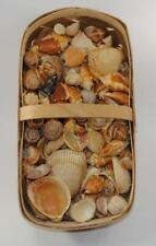 Seashell Assortment for Crafting 2 pounds of assorted seashells jar filling