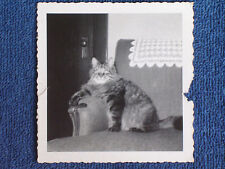 Sammy the Cat Proudly Poses in Easy Chair-Right Paw on Armrest/1940s Snapshot