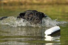 """Avery Greenhead Gear Dog 3"""" Black & White Flasher Canvas Training Bumper Dummy"""