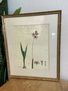 1798 H.C. Andrews Hand Colored Engraving Professionally Framed Botanical Print