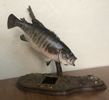 Vintage 1983 Smallmouth Bass 4.25lbs Taxidermy Tabletop Mount Driftwood W/Plaque