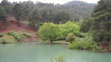 Quercus Vulcanica Kasnak Oak 2 Seeds