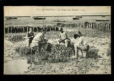 France LE CHAPUS Sorting Oysters Triages de Huitres LL Louis Levy PPC 1923?