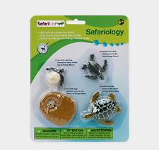 GREEN SEA TURTLE- LIFE CYCLES #662316 ~ FREE SHIP to USA w/$25+SAFARI, Products