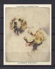1939 Arthur Wardle Dog Art Head Portrait Player Cigarette Card Clumber Spaniel