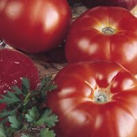 Tomate Raf Marmande  500 Semillas frescas