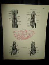 ARTERIES+VEINS+LYMPHATICS #68 Old Print From Descriptive Atlas of Anatomy 1880