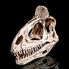 Resin Dinosaur Cryolophosaurus Skull Fossil Teaching Bone Collectibles White