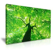 Green  Forest Tree Canvas Wall Art Picture Print 76cmx50cm