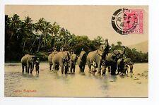 ELEPHANTS Ceylan belle carte couleur de 1912 d'un groupe d'éléphants se baignant
