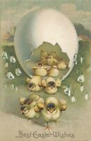 EASTER - Lots of Chicks Leaving Egg with Gold Background