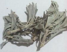 1 oz White Ceremonial Sage (Salvia apiana) Wildharvested & Kosher USA