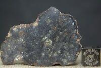 NWA 11704 Polymict Eucrite Breccia HED Meteorite 13.3 gram windowed fragment
