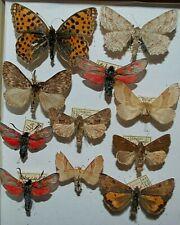 Moth Mix,Europa 54,rare