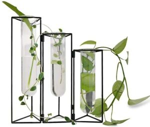 Glass Test Tubes Vase Flower Hydroponic Planter Stand Rack Decor with Iron Frame