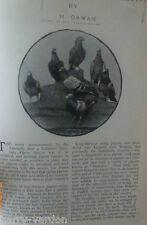 Paloma mensajera recalada Paloma viejo Eduardiano Antiguo foto del artículo 1904 a H Osman