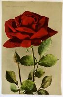 Vintage Floral Postcard No. 1960 American Beauty Red Rose Edwin H Mitchell