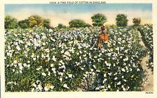 Fine Field of Cotton in Dixie Postcard Farmer
