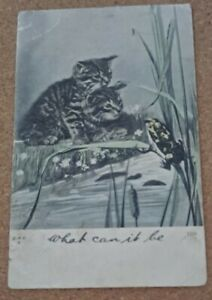 Vintage Cat Postcard. Two kittens watching frog at pond. British. PM 1905.
