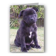 Staffy Greeting Card - Dog