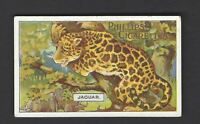 PHILLIPS - ANIMAL SERIES - #24 JAGUAR