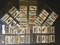 British Birds Cigarette Cards 48 Of 50 Card Set Ogden's Antique 1905