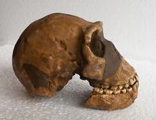 MOULAGE FOSSILE crane Homo Naledi Néo fossil skull replica hominid cast