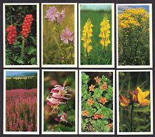 CIGARETTE CARDS. John Player Grandee Cigars.BRITAIN'S WILD FLOWERS.(Set).(1986).