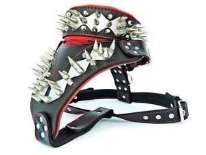 Collar & Harness SET, Sainless steel, unique design & quality! handmade in EU.