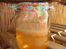JUN Tee-Pilz ★★ das Urgestein des Kombucha Teepilz ★ sehr aktive Kultur!!! ★.