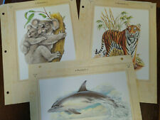 "(3) Lithographs Bengal Tiger, Koala & Common Dolphin (10"" x 7"")"