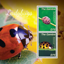 Gambia-Insects-2014-Ladybugs