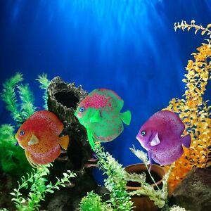 Floating Discus Fish Glowing Effect Aquarium Tank Ornament Decoration Safe