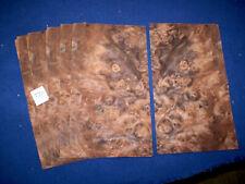 Nussbaum Maser Furnier 1 Paket    260 x 140 mm   8 Blatt      Nr. 970
