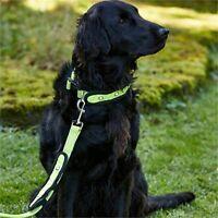 Masta Woofmasta Dog Lead Hi-viz Flashing, Fluorescent Yellow