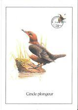 FDC 2459 - Oiseau Buzin sur gravure format A4 !