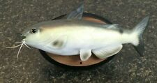 2000 Gemmy Cool Catfish The Coolest Baddest Cat on dry land! Singing Fish Talks