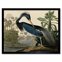 Audubon Birds Louisiana Heron Painting Wall Art Print Framed 12x16
