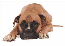 CROSS STITCH KIT -  BOXER DOG  33CM X 21 CM